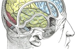 This is an illustration of a brain in an open skull.