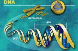 This is an illustration of DNA.