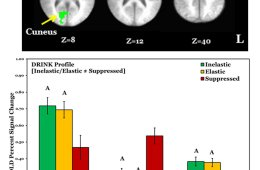 This image shows the fmri and charts from the study.