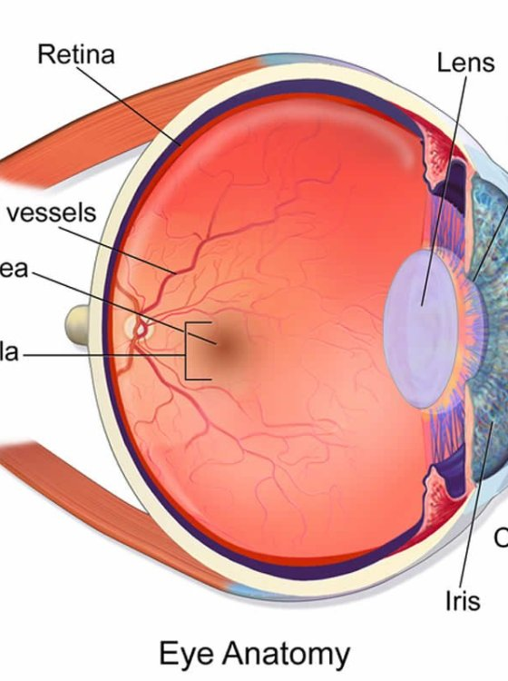 Mature retina ophthalmology