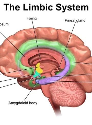 Weaker Gut Instinct Makes Teens Open To >> Neuroscience News Brain Psychology Ai Neurology And Cognitive