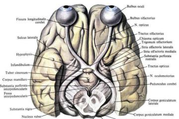 This is an image of the visual system.