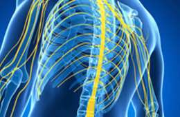 This image shows an outline of a body with spinal cord nerves highlighted in yellow.