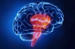 The image shows a brain on a blue background.