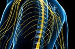 This image shows an outline of a person with the sinal cord and nerves highlighted in yellow.