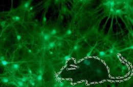 This image shows green neurons in the background and an illustration of a mouse infront.