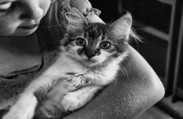 The image shows a young girl holding a kitten.