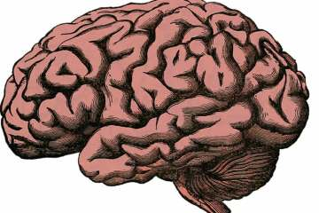 This illustration is of a brain.