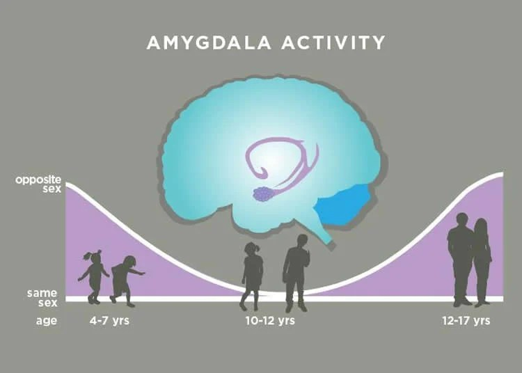 Amygdala sex something