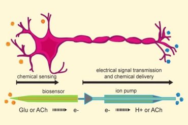 Image shows a drawing of a neuron and the electronic components.