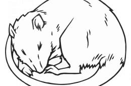 This image shows a drawing of a sleeping rat.
