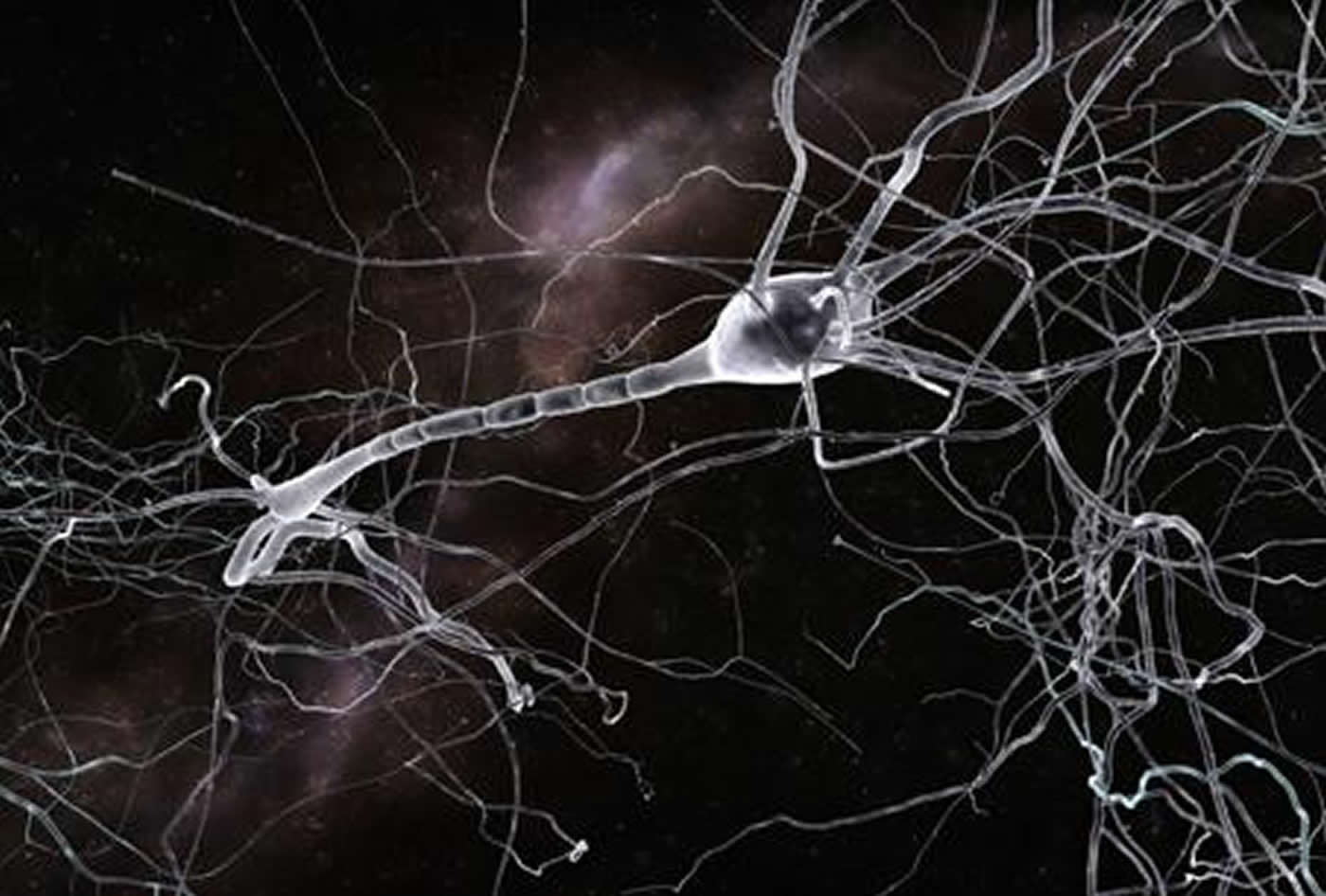 Illustration of a neuron.