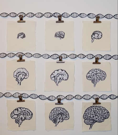 Genetic Variants Associated with Schizophrenia Influence
