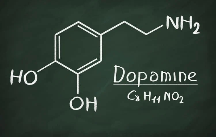 The Role of Dopamine in Motivation and Learning