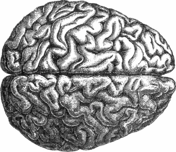 Theory Linking Brain Activity to Shape of Brain Could Shed Light on Human Consciousness