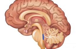 Illustration showing a cut away of the brain with the locus coeruleus highlighted in blue.