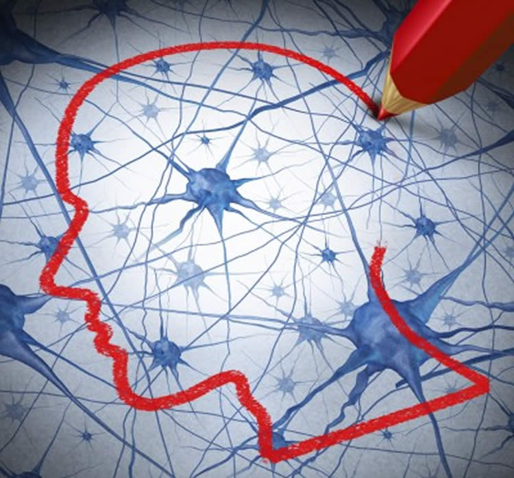 Image shows neurons and a red pecil drawing the outline of a head.