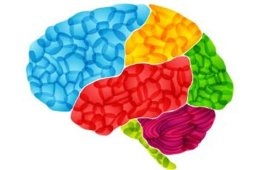 Image of a multi colored brain.