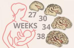Image shows different stages of brain development between 27 and 38 weeks.