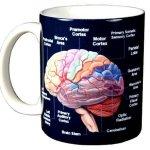 Brain-11-oz-Ceramic-Coffee-Mug-0