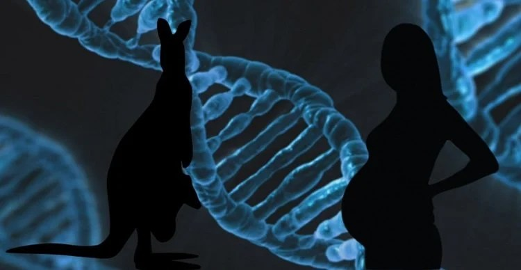Image shows DNA, a pregnant woman and a kangaroo.