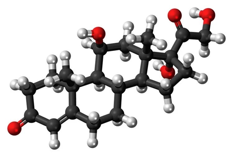 Image shows a stick and ball model of cortisol.