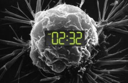 Image shows a brain and a clock.