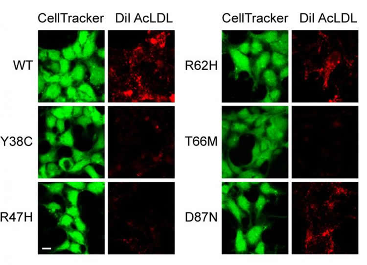 Image shows cell samples.