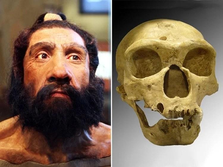 Obraz przedstawia czaszkę i model głowy mężczyzny neandertalczyka.