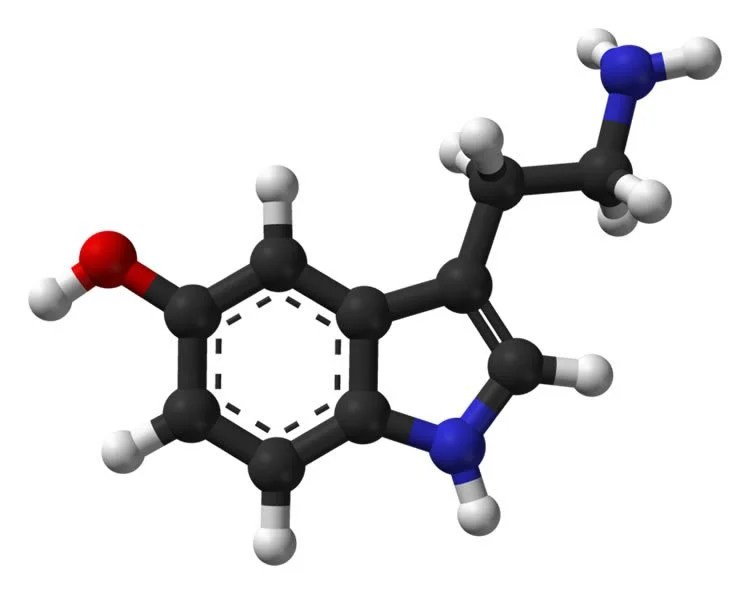 Image shows stick and ball structure of serotonin.