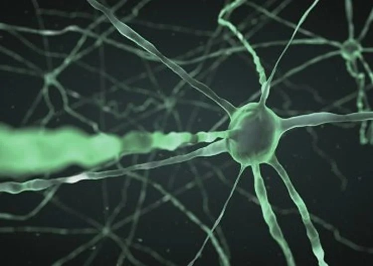 Research Identifies Complex Of Neurons >> Long Sought Warm Sensitive Brain Cells Identified In New Study