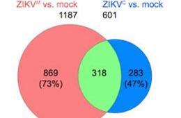 Image shows a ven diagram.