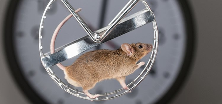 Image shows a mouse on a treadmill.