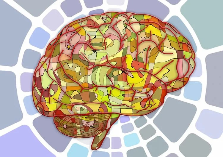 Our Brains Have a Basic Algorithm That Enables Our Intelligence