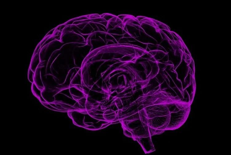 Image shows a purple brain.