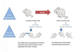 Image shows a diagram of how the gentic risk could affect the behavior of the next generation of mice.