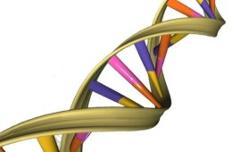 Image shows DNA double helix.