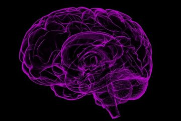 Image shows a purple brain.