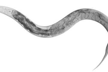 a worm