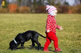 Image shows a dog and a little girl.