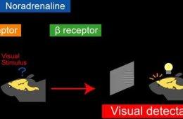 Image shows a visual abstract.