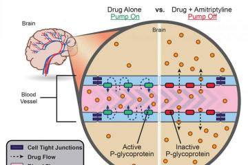 Image shows a diagram explaining how amitriptyline allows drugs to pass the bbb.