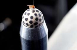 Image shows a fly on a ball.