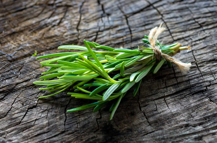 Image shows a sprig of rosemary.