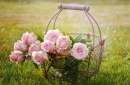Image shows a basket of roses.