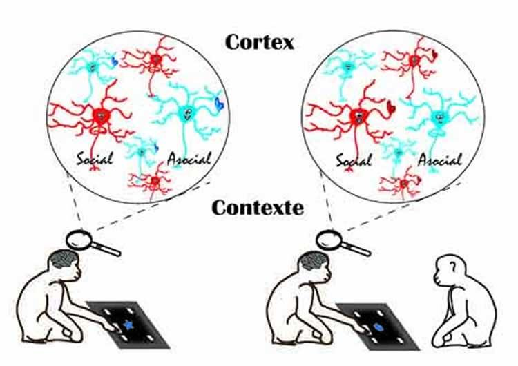 Image shows the brain network organization.