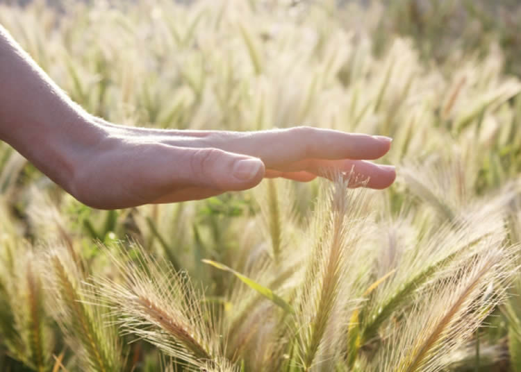 Image shows a hand touching grass.