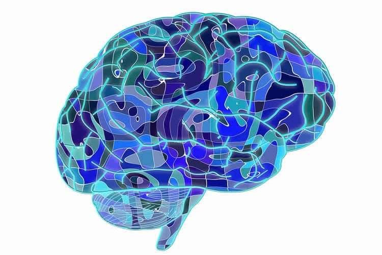 Image shows a brain.