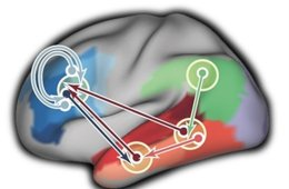 Image shows brain scans with the occipital cortex highlighted.