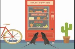 Image shows mice at a vending machine.
